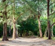 Schleppen Sie an Leamsala-Weise zu Höhle Phraya Nakorn, Thailand Nationalpark Khao Sam Roi Yot stockbilder