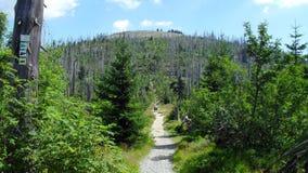 Schleppen Sie zur Spitze des Lusen-Berges stockfoto