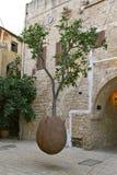 Schleppender Orangenbaum stockbilder