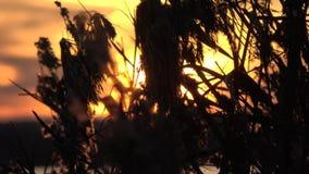 Sunset in Sleswick, Schleswig-Holstein, Germany stock video footage