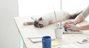 Schläfrige Katze auf einem Desktop Stockfotos