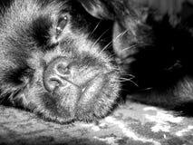 Schläfriger Hund Stockfoto