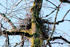 Schließen Sie auf Eagles Nest Stockbild