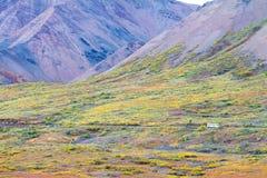 Schließen Sie Bus in Nationalpark Denali in Alaska Fensterläden Stockfotografie