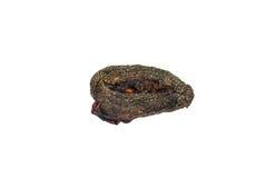 Schließen Sie getrocknete Cat Placenta, Amulett in Thailand ab, lokalisiert Stockfoto
