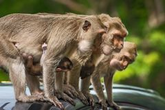 Schließen Sie herauf Affen Stockfotos