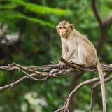 Schließen Sie herauf Affen Stockfoto