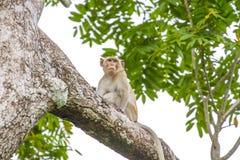 Schließen Sie herauf Affen auf Baum Stockbild