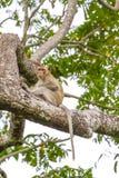 Schließen Sie herauf Affen auf Baum Lizenzfreies Stockfoto