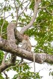Schließen Sie herauf Affen auf Baum Lizenzfreies Stockbild