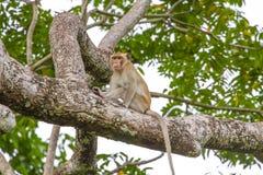 Schließen Sie herauf Affen auf Baum Stockbilder