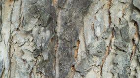 Schließen Sie herauf alten hölzernen Baum Stockfotos