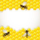 Schließen Sie herauf Ansicht der Arbeitsbienen auf Bienenwaben Lizenzfreies Stockbild