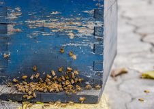 Schließen Sie herauf Ansicht der Arbeitsbienen, nah an einem Kamm und Arbeitsbienen Lizenzfreies Stockfoto