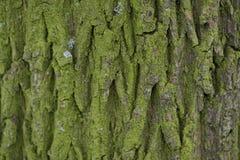 Schließen Sie herauf Ansicht der Barke eines Baums Stockbild