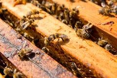 Schließen Sie herauf Ansicht der Bienen, die auf einer Bienenwabe schwärmen Stockfotografie