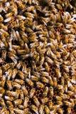 Schließen Sie herauf Ansicht der Bienen, die auf einer Bienenwabe schwärmen Lizenzfreies Stockfoto