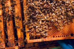 Schließen Sie herauf Ansicht der Bienen, die auf einer Bienenwabe schwärmen Lizenzfreie Stockfotos