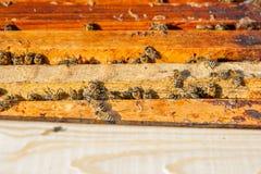 Schließen Sie herauf Ansicht der Bienen, die auf einer Bienenwabe schwärmen Stockbilder