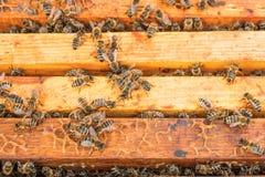 Schließen Sie herauf Ansicht der Bienen, die auf einer Bienenwabe schwärmen Lizenzfreie Stockbilder