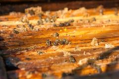 Schließen Sie herauf Ansicht der Bienen, die auf einer Bienenwabe schwärmen Stockfoto
