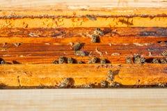 Schließen Sie herauf Ansicht der Bienen, die auf einer Bienenwabe schwärmen Lizenzfreies Stockbild