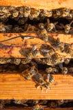 Schließen Sie herauf Ansicht der Bienen, die auf einer Bienenwabe schwärmen Stockfotos