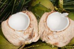 Schließen Sie herauf Ansicht der netten frischen Kokosnuss Stockfoto