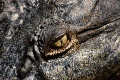 Schließen Sie herauf Ansicht des Auges eines Krokodils. Lizenzfreies Stockfoto