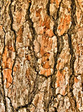 Schließen Sie herauf Ansicht des Holzes stockfoto