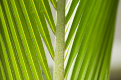Schließen Sie herauf Ansicht des netten grünen Palmblattes auf natürlichem Hintergrund Lizenzfreies Stockfoto