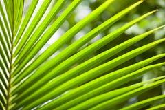 Schließen Sie herauf Ansicht des netten grünen Palmblattes auf natürlichem Hintergrund Lizenzfreies Stockbild