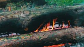 Schließen Sie herauf Ansicht eines enormen brennenden Brennholzes, oder Klotz liegen auf dem Grün und brennen in den Flammen des  stock footage