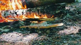 Schließen Sie herauf Ansicht eines enormen brennenden Brennholzes, oder Klotz liegen auf dem Grün und brennen in den Flammen des  stock video footage