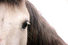Schließen Sie herauf Ansicht eines Pferdenauges Stockfotos