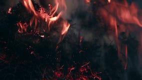 Schließen Sie herauf Ansicht am trockenen Gras, das im Waldbrand brennt stock video footage