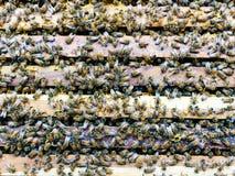 Schließen Sie herauf Ansicht von Arbeitsbienen Lizenzfreies Stockfoto