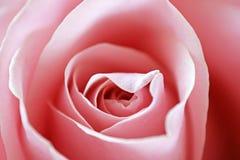 Schließen Sie herauf Ansicht von einer schönen rosa Rose Stockfoto