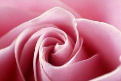 Schließen Sie herauf Ansicht von einer schönen rosa Rose Lizenzfreie Stockfotos