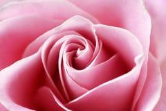 Schließen Sie herauf Ansicht von einer schönen rosa Rose Stockfotos