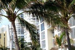 Schließen Sie herauf Ansicht von Palmen mit Gebäuden im Hintergrund Lizenzfreie Stockfotografie