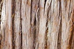 Schließen Sie herauf Beschaffenheit der Baumrinde stockfotografie