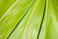 Schließen Sie herauf Beschaffenheit von Blättern Stockfotografie