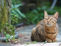 Schließen Sie herauf Bild der Katze Lizenzfreie Stockbilder
