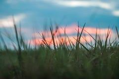 Schließen Sie herauf Bild von den gras mit einem schönen Sonnenuntergang stockbild