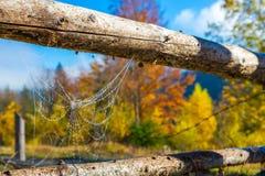Schließen Sie herauf Bild von gefrorenem bis zum Morgen kaltes Spiderweb, das zwischen traditionellen ländlichen Zaun ausgedehnt  Lizenzfreie Stockfotografie