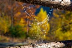 Schließen Sie herauf Bild von gefrorenem bis zum Morgen kaltes Spiderweb, das zwischen traditionellen ländlichen Zaun ausgedehnt  Lizenzfreies Stockfoto