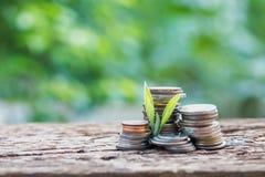 Schließen Sie herauf Blatt auf Münzen des Wachstums oder der Investition, um Finanzierung zu profitieren Lizenzfreie Stockfotos