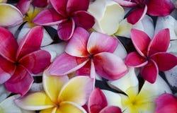 Schließen Sie herauf Blume Stockfoto