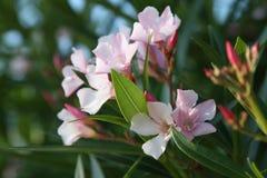 Schließen Sie herauf Blume Stockfotos